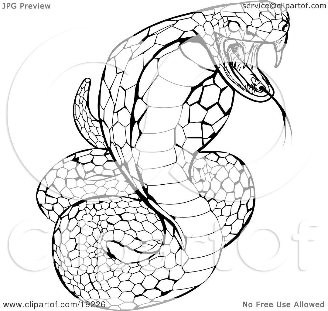Free coloring pages king cobra - Clipart Illustration Of A Striking Venomous Cobra Snake By Atstockillustration