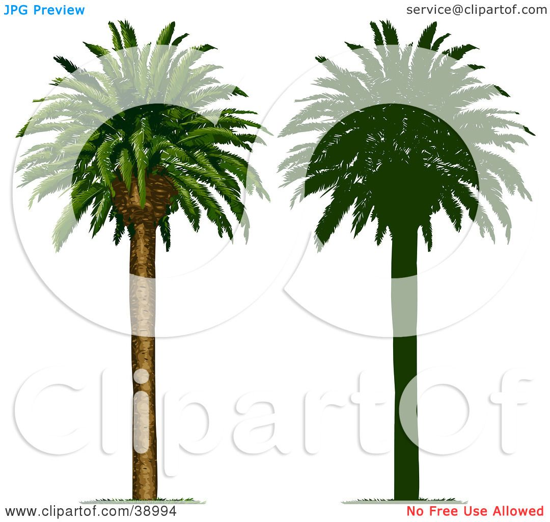 Clipart Illustration Of A Tall And Straight Tropical Palm