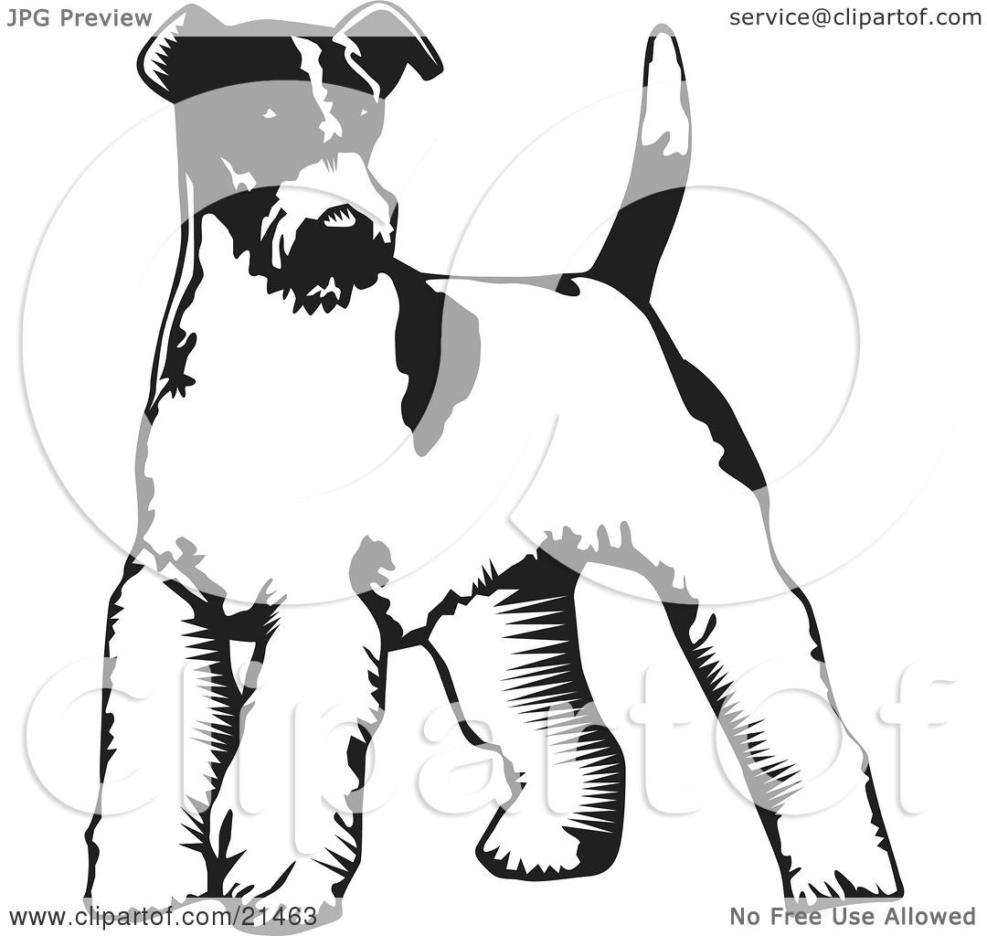 Clipart Illustration of a Wire Fox Terrier Dog Standing On A White ...