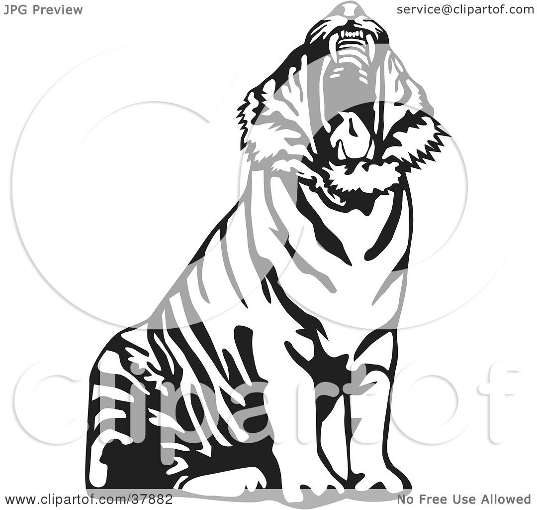 Clipart Illustration of a Yawning Black And White Tiger by ...