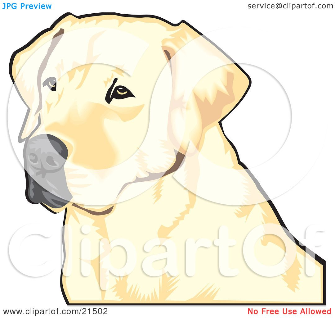 Clipart Illustration of a Yellow Labrador Retriever Dog With A Black ...