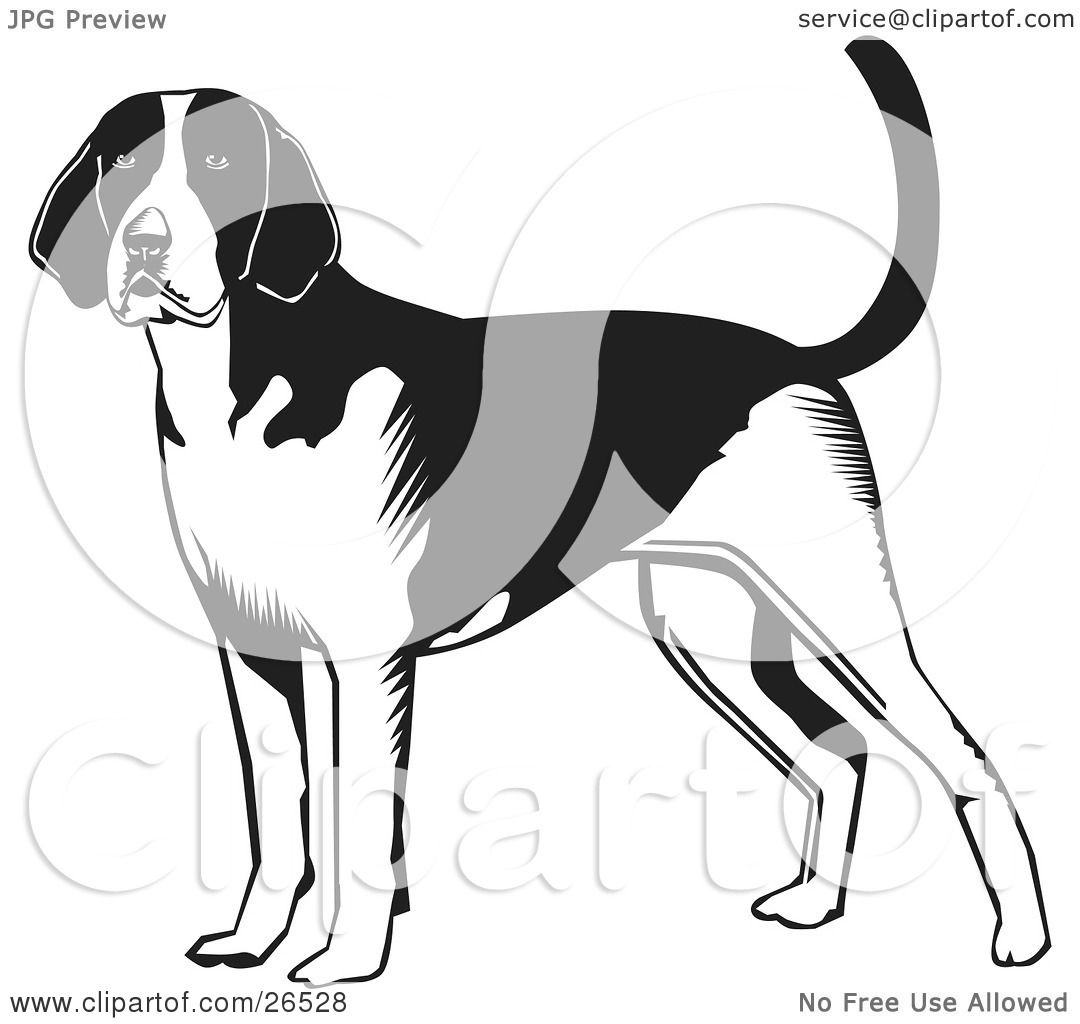 Clipart Illustration Of An Alert American Foxhound Dog