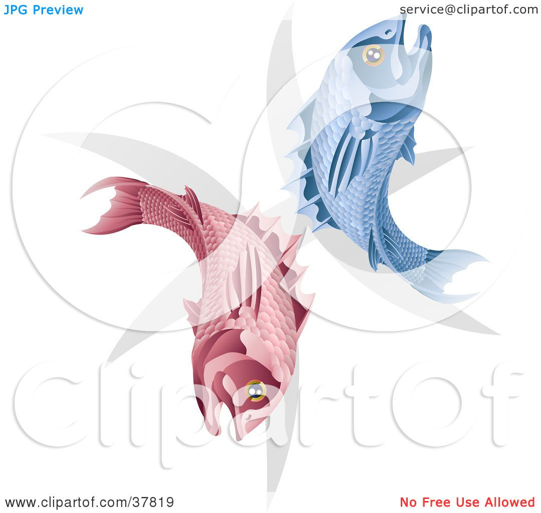 Clipart Illustration Of Pink And Blue Pisces Fish With The Zodiac