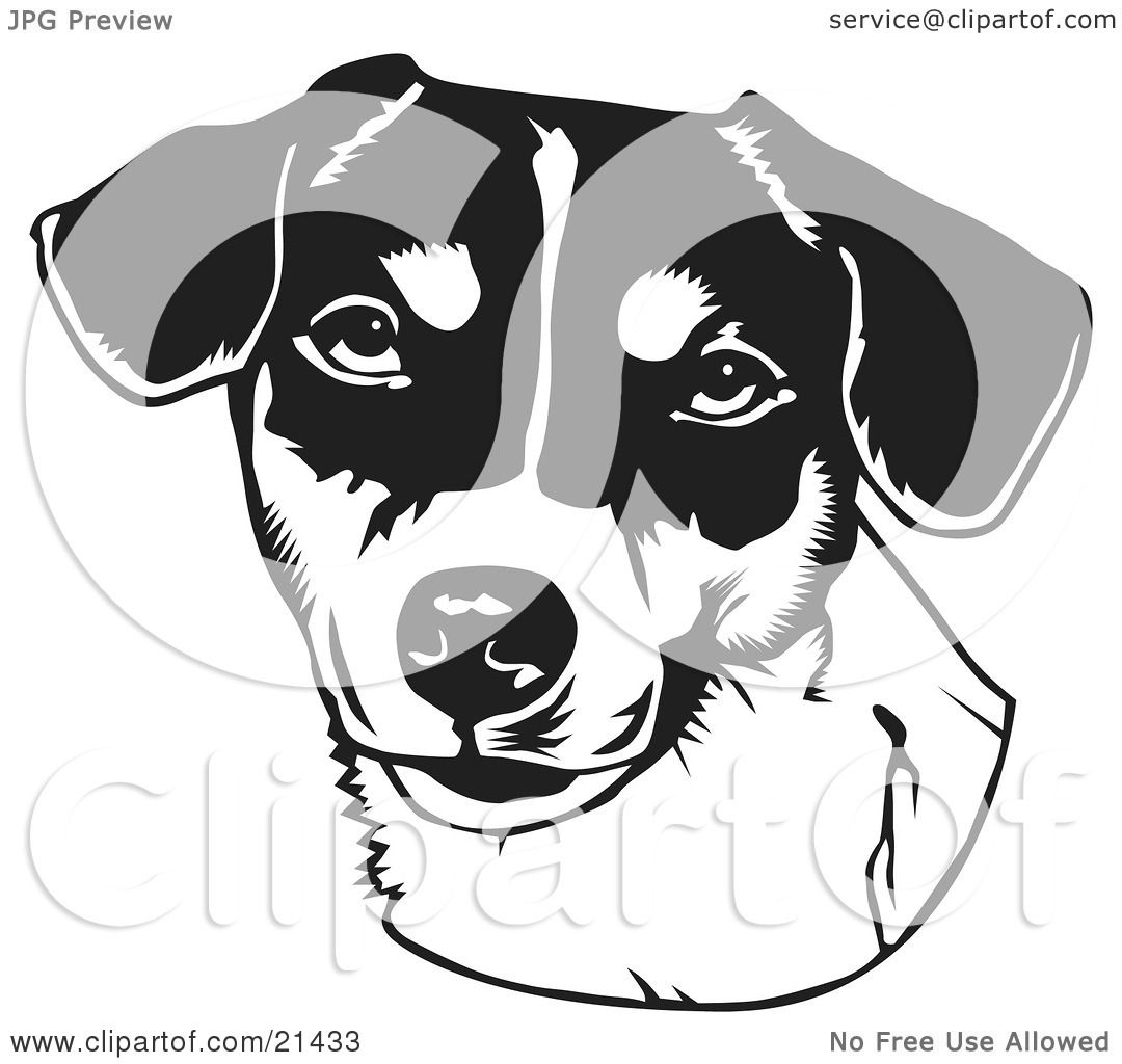 Clipart illustration of the face of a friendly jack russell terrier dog over a white background - Clipart visage ...