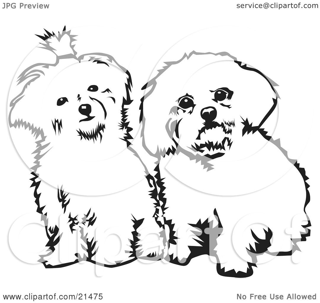 maltese dog clipart - photo #40