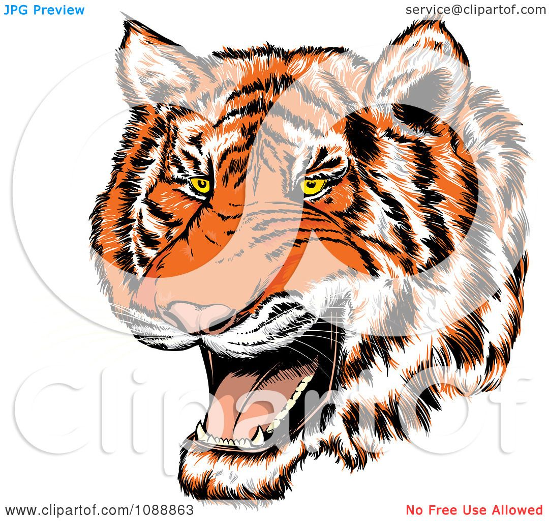 Clipart Mad Tiger Growling Royalty Free Vector