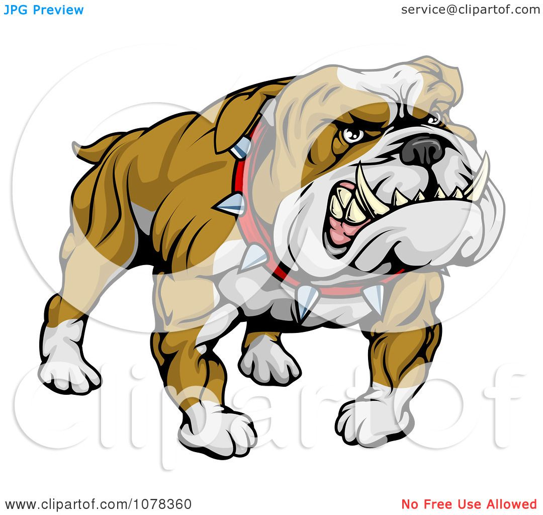 Clipart Mean And Muscular Bulldog Growling - Royalty Free Vector ...