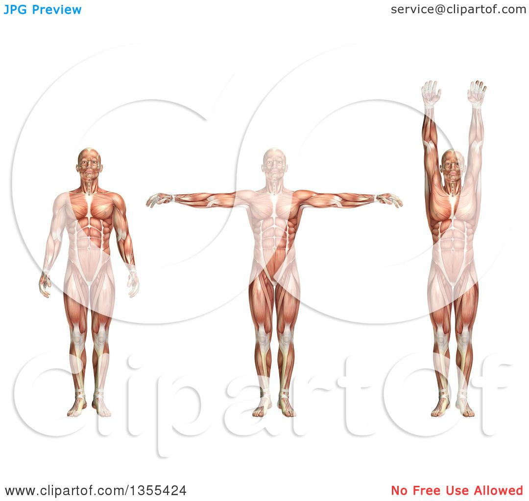 Adduction in anatomy 5118067 - follow4more.info