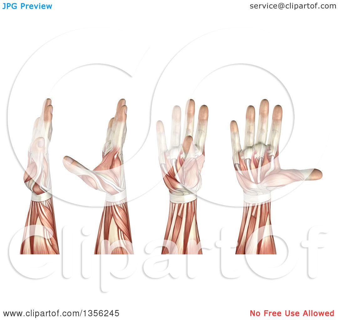 Royalty Free Rf Thumb Clipart Illustrations Vector Graphics 1