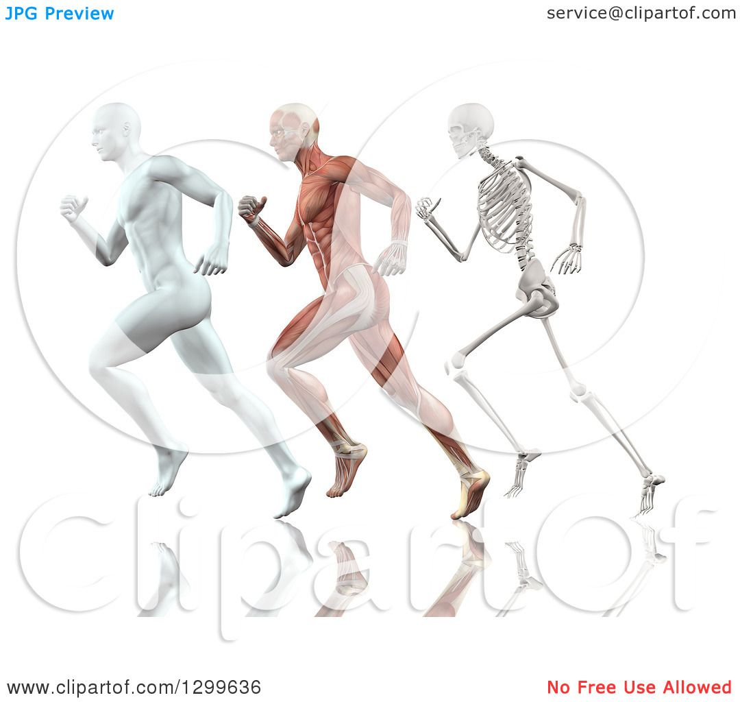 Clipart Of A 3d Anatomical White Man Muscle Man And