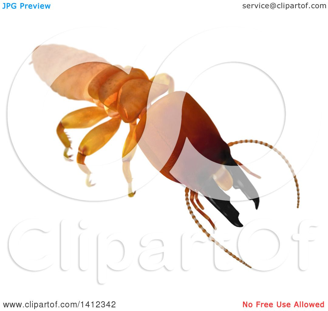 Clipart of a 3d Termite Soldier from the Front - Royalty Free ...