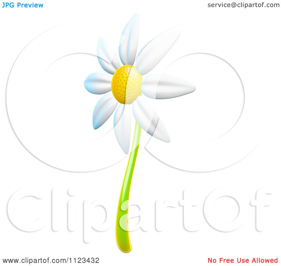 Clipart Of A 3d White Daisy Flower - Royalty Free CGI Illustration ...