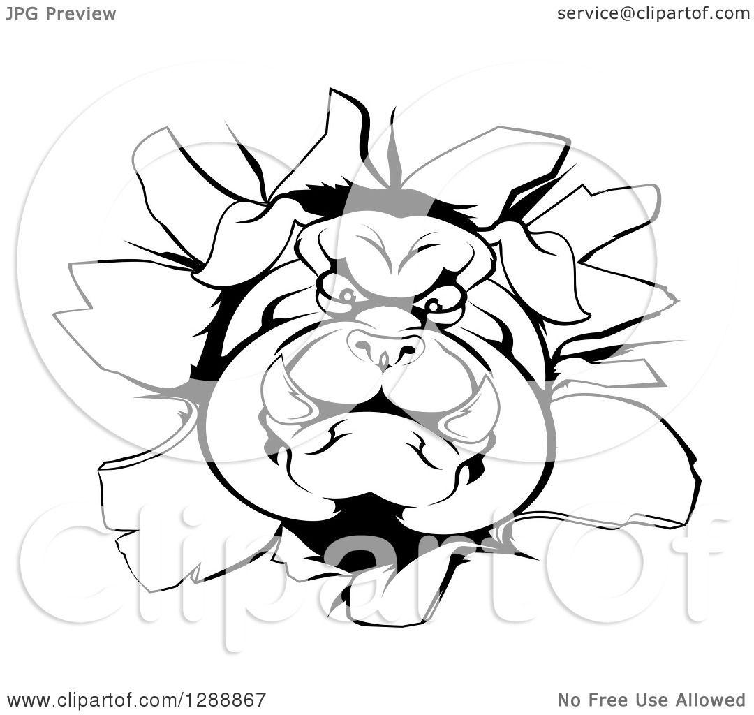Clipart Of A Black And White Aggressive Bulldog Breaking