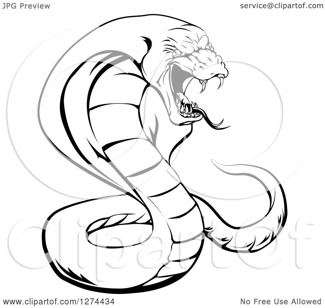 Clipart of a Black and White Aggressive Cobra Snake Ready ...