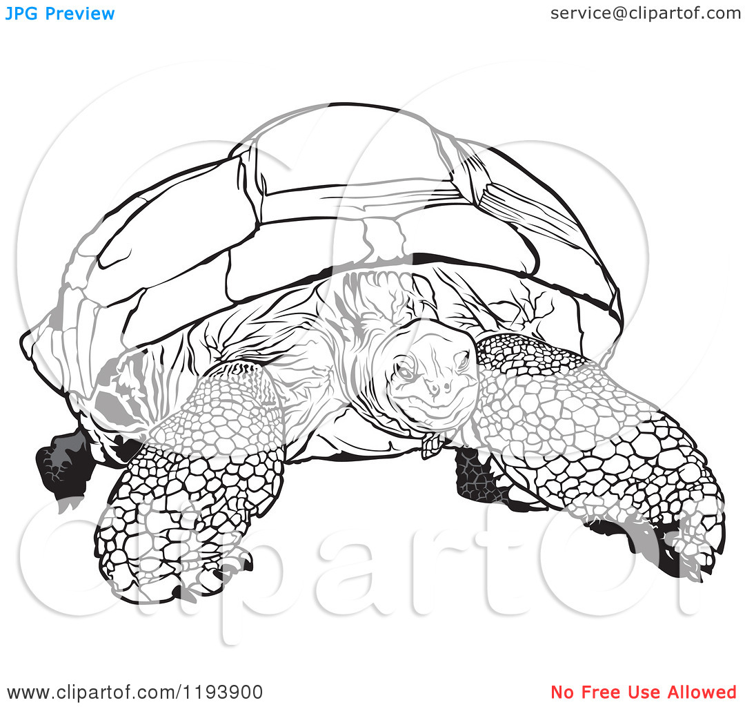 galapagos coloring pages turtle - photo#41