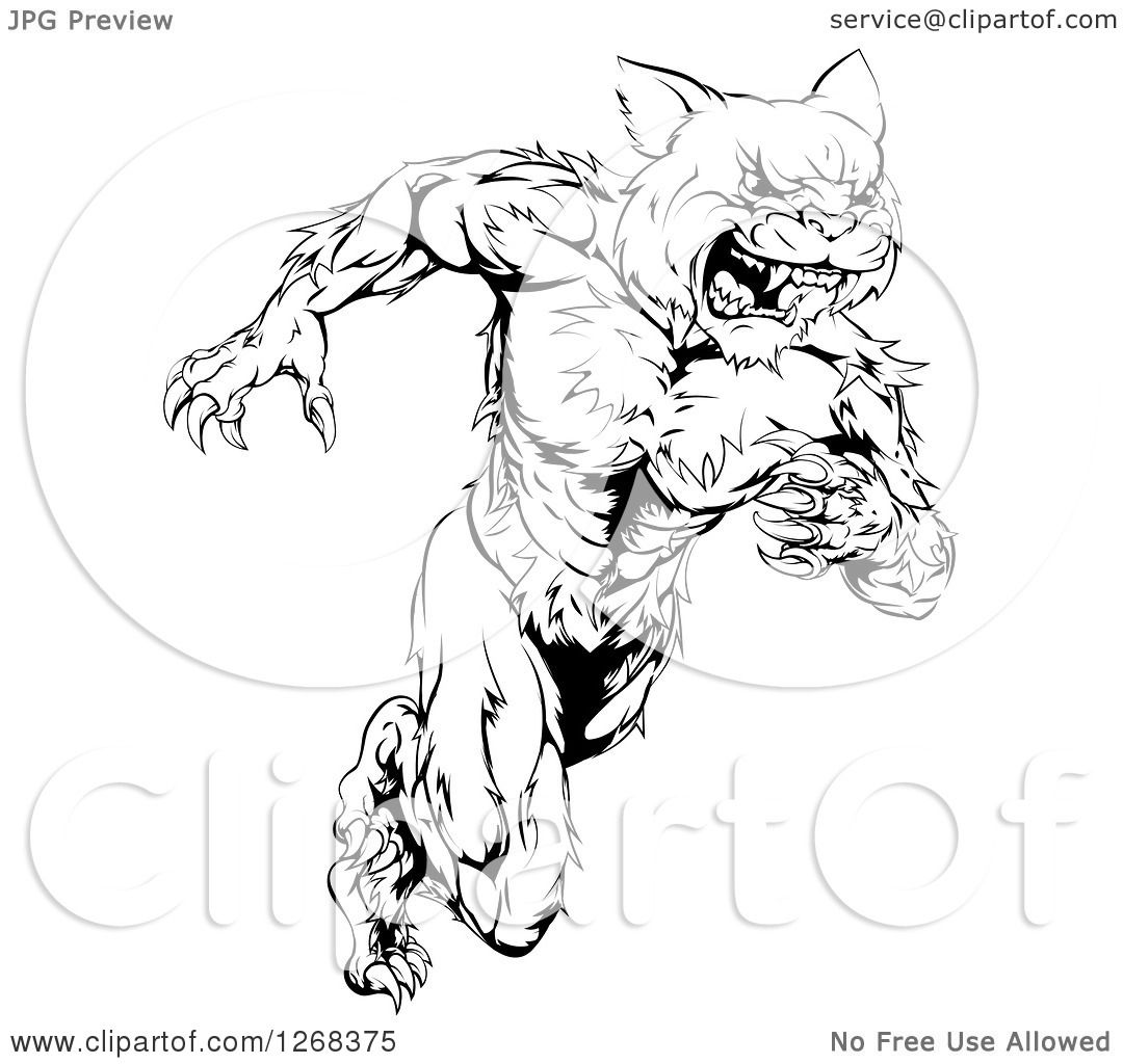 Clipart of a Black and White Angry Muscular Wildcat Mascot Running ...