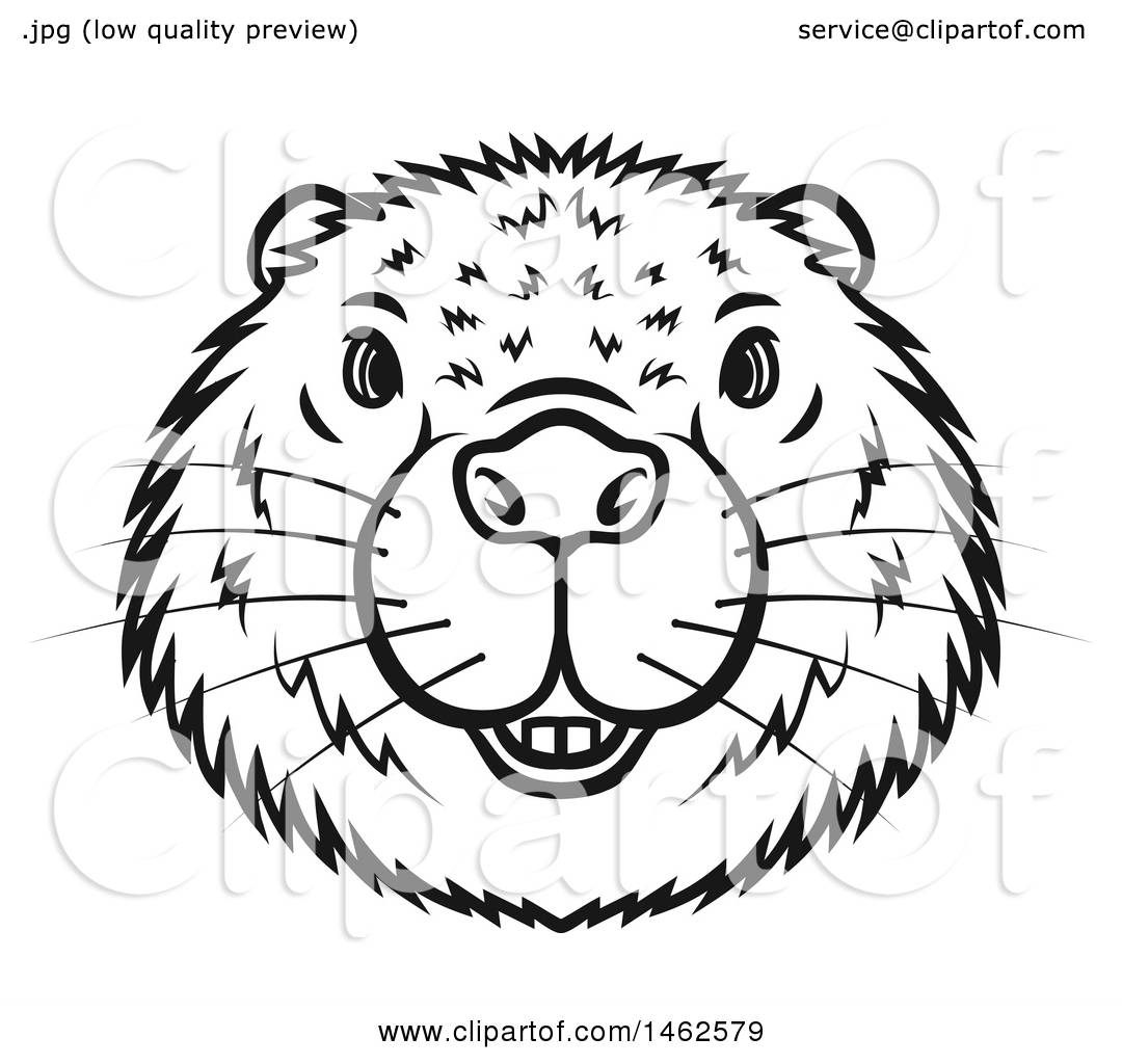Clipart of a Black and White Beaver Mascot Face - Royalty Free ...
