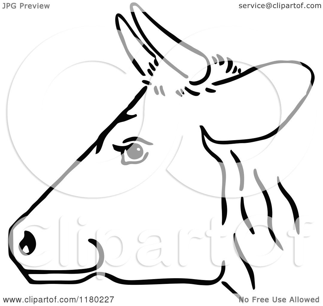 Clipart of a Black and White Cow Head in Profile - Royalty ...