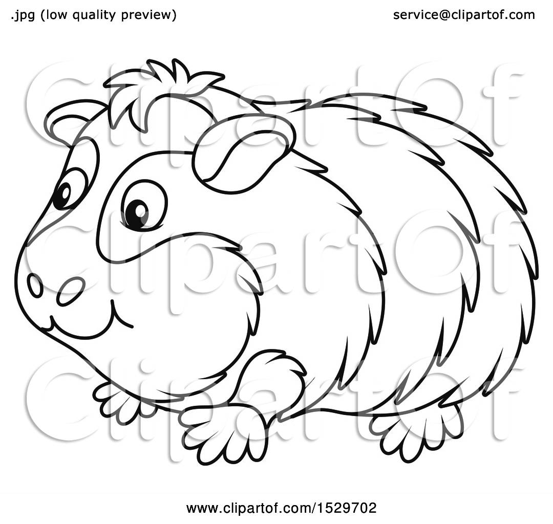 Clipart of a Black and White Cute Guinea Pig - Royalty ...