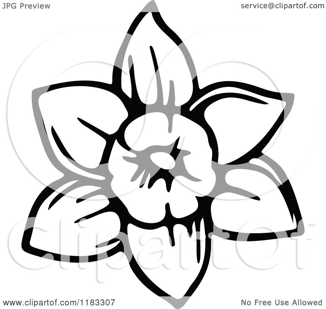 Clipart of a Black and White Daffodil Flower - Royalty ...