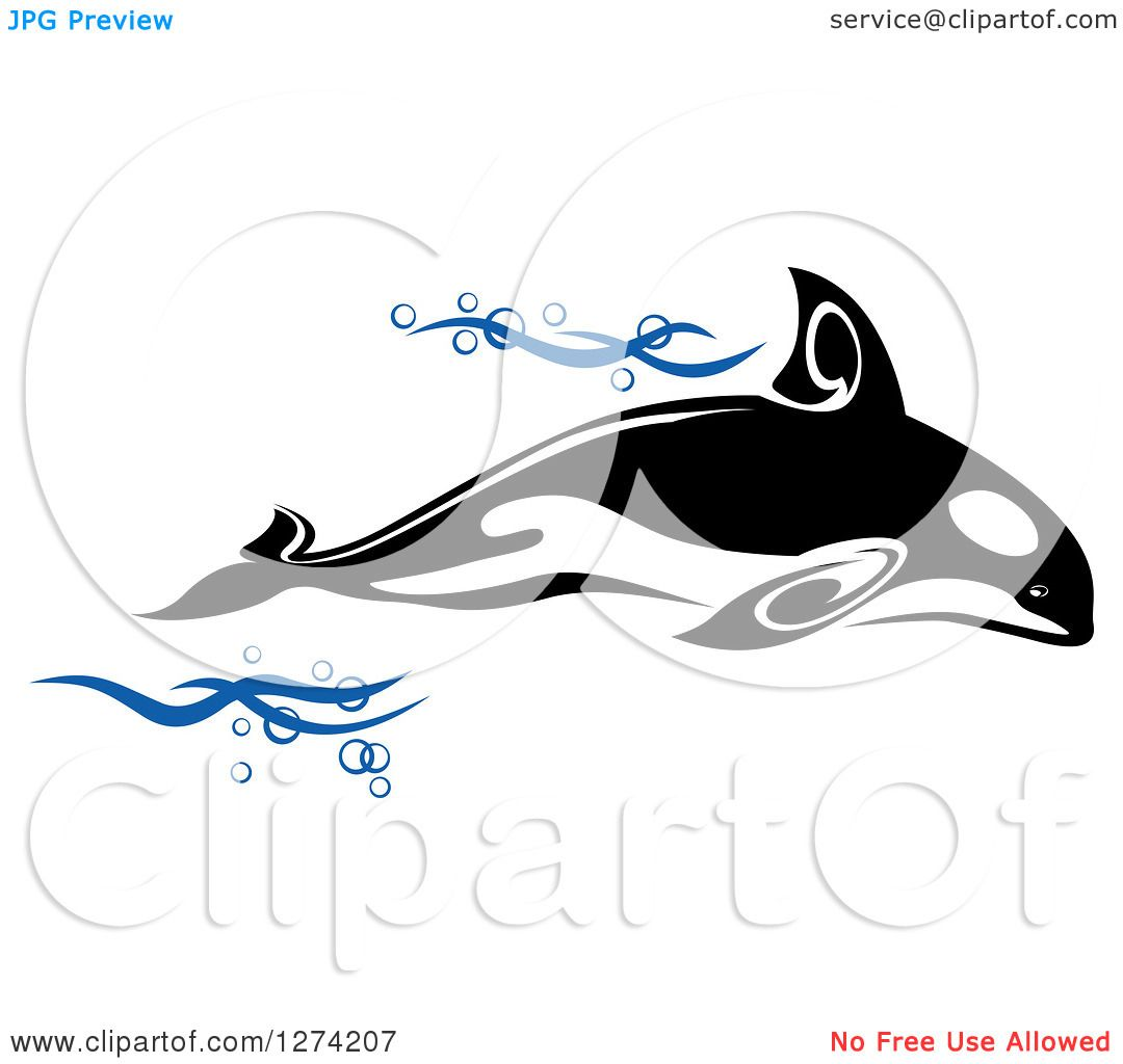 Dorable Anatomy Of A Killer Whale Elaboration - Human Anatomy Images ...