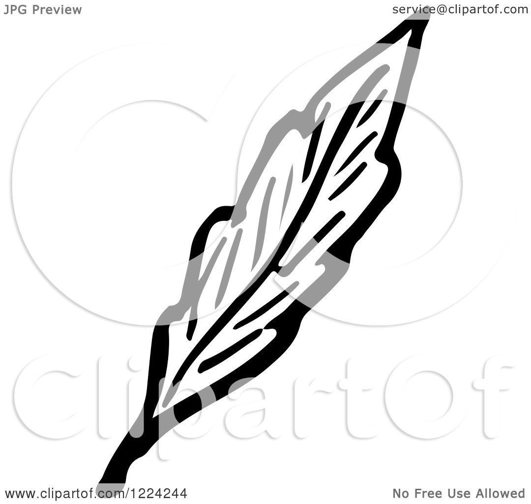 Clipart of a Black and White Leaf - Royalty Free Vector ...