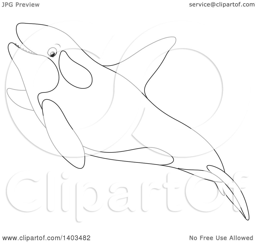 Free coloring pages killer whale - Clipart Of A Black And White Lineart Killer Whale Orca Swimming Royalty Free Vector Illustration By Alex Bannykh