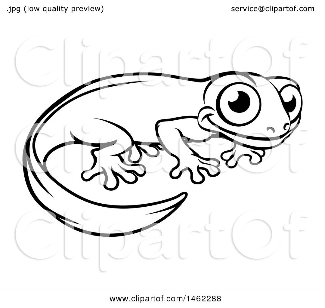 Clipart of a Black and White Newt or salamander - Royalty ...
