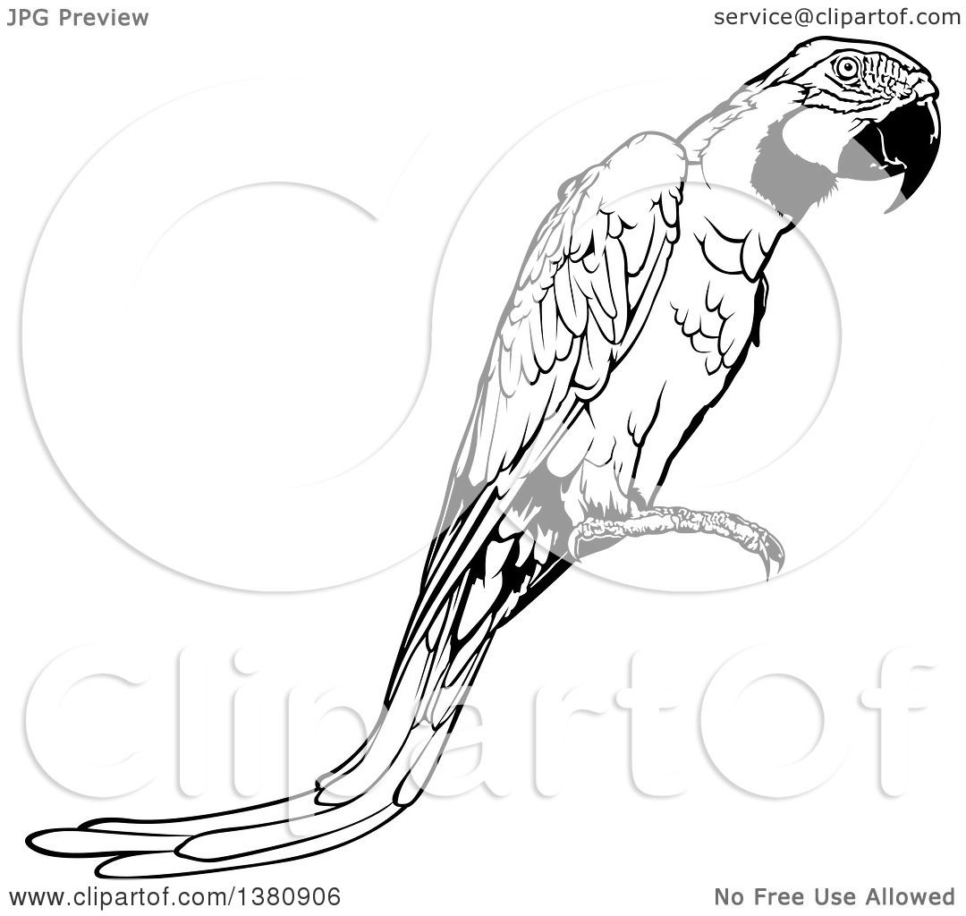 Clipart of a Black and White Perched Macaw Parrot ...