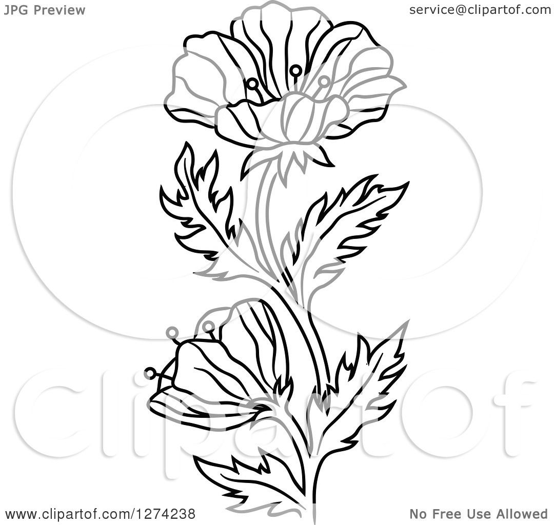 Clipart Of A Background Of Red Poppy Flowers Over Beige And White