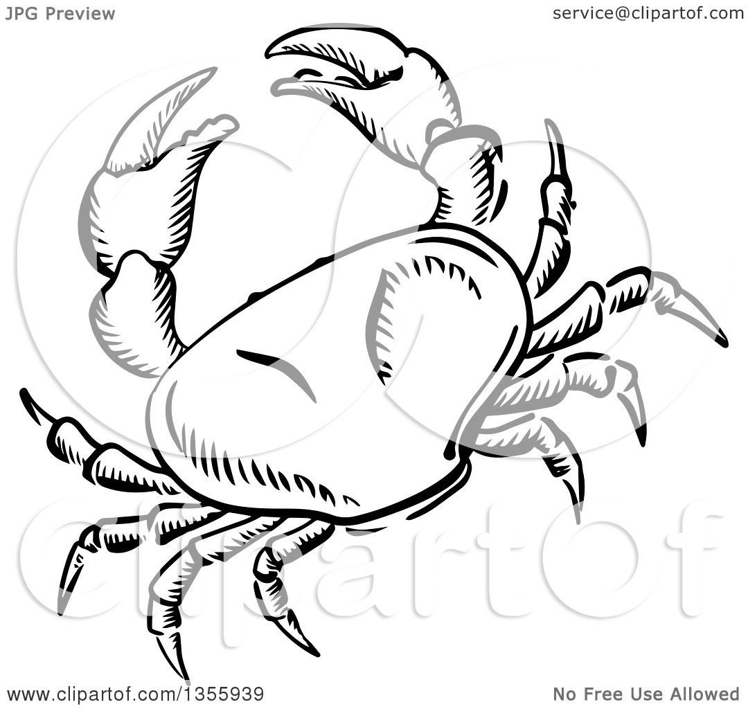 Clipart of a Black and White Sketched Crab - Royalty Free Vector ...