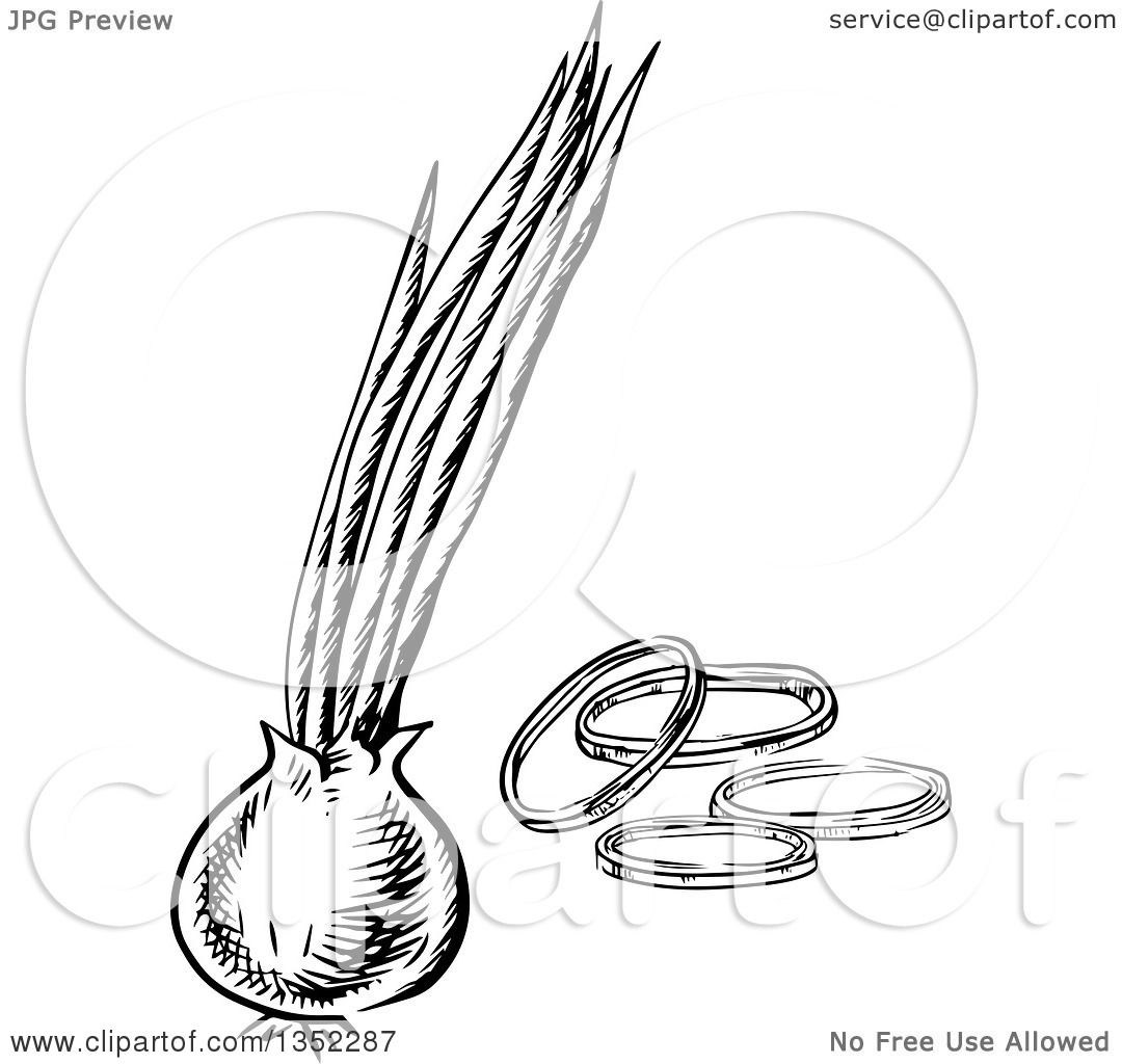 Onion Illustration Black And White Clipart Of A Black And