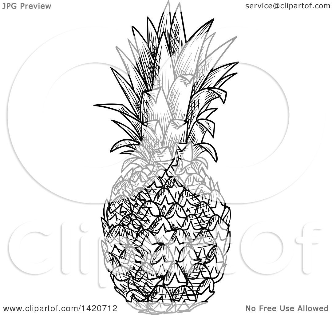 Clipart of a Black and White Sketched Pineapple - Royalty Free ... for Clipart Pineapple Black And White  5lp5wja