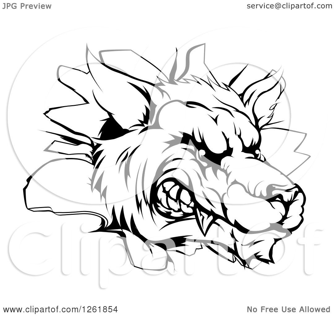 Clipart Of A Black And White Snarling Wolf Mascot Head Breaking Through A  Wall Royalty Free How To Draw Chibi