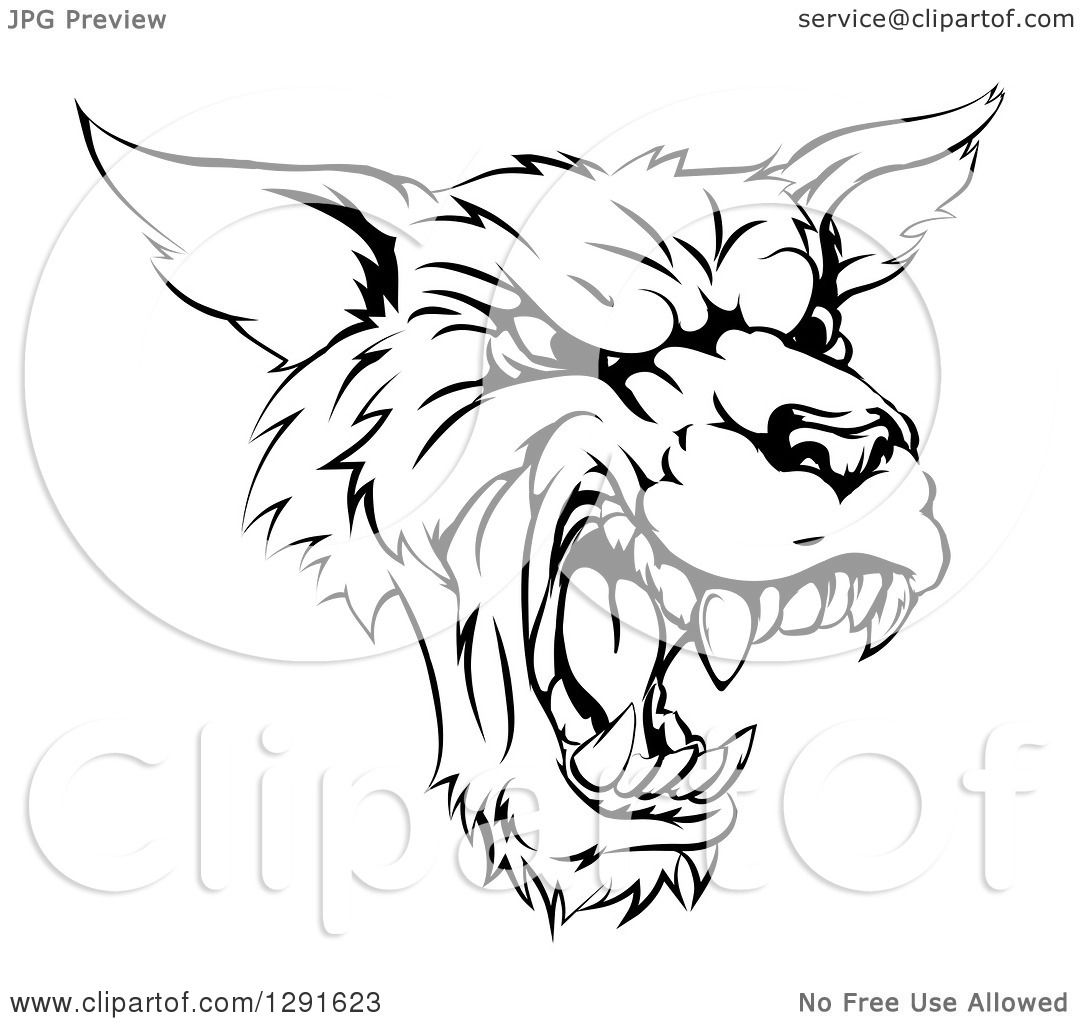 Clipart of a Black and White Vicious Snarling Wolf Mascot