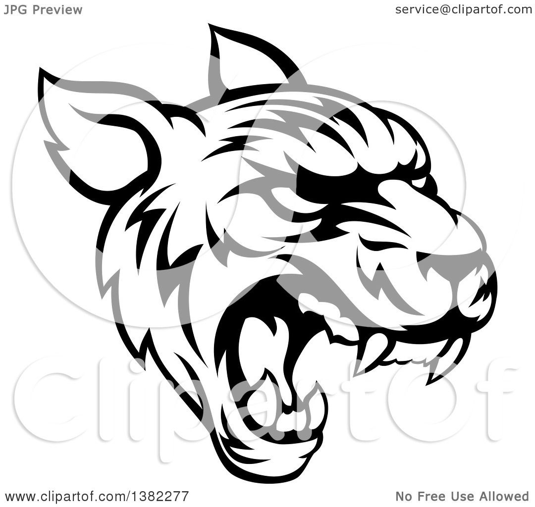 Clipart Of A Black And White Vicious Tiger Mascot Face Roaring Royalty Free  Vector Illustration By