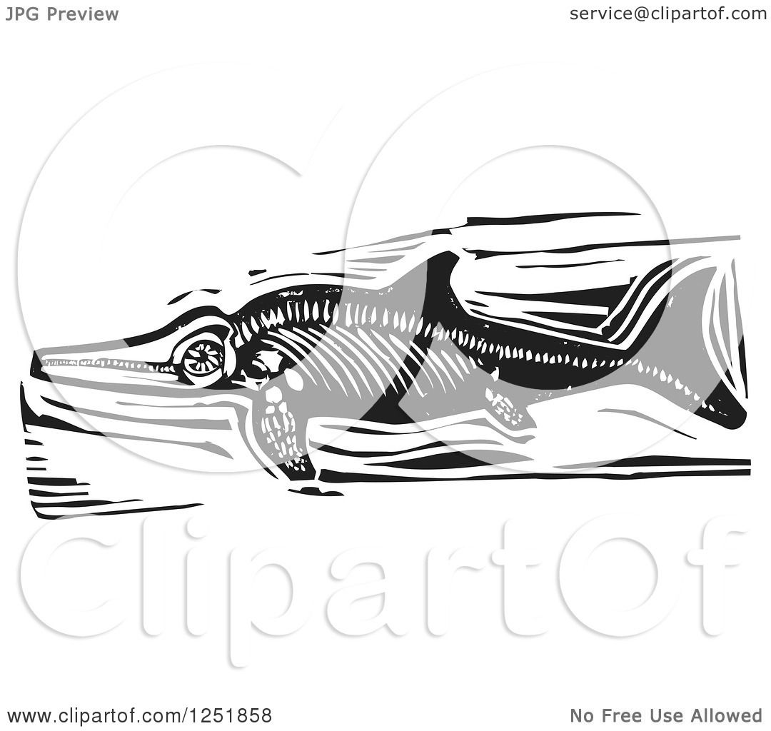 coloring page displaying 17 images for ichthyosaurus coloring pageIchthyosaurus Coloring Page