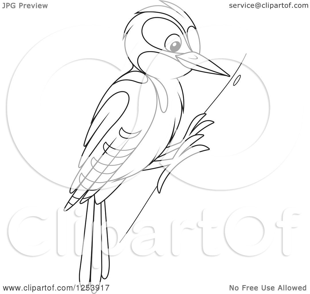 Clipart of a Black and White Woodpecker Bird on a Tree ...