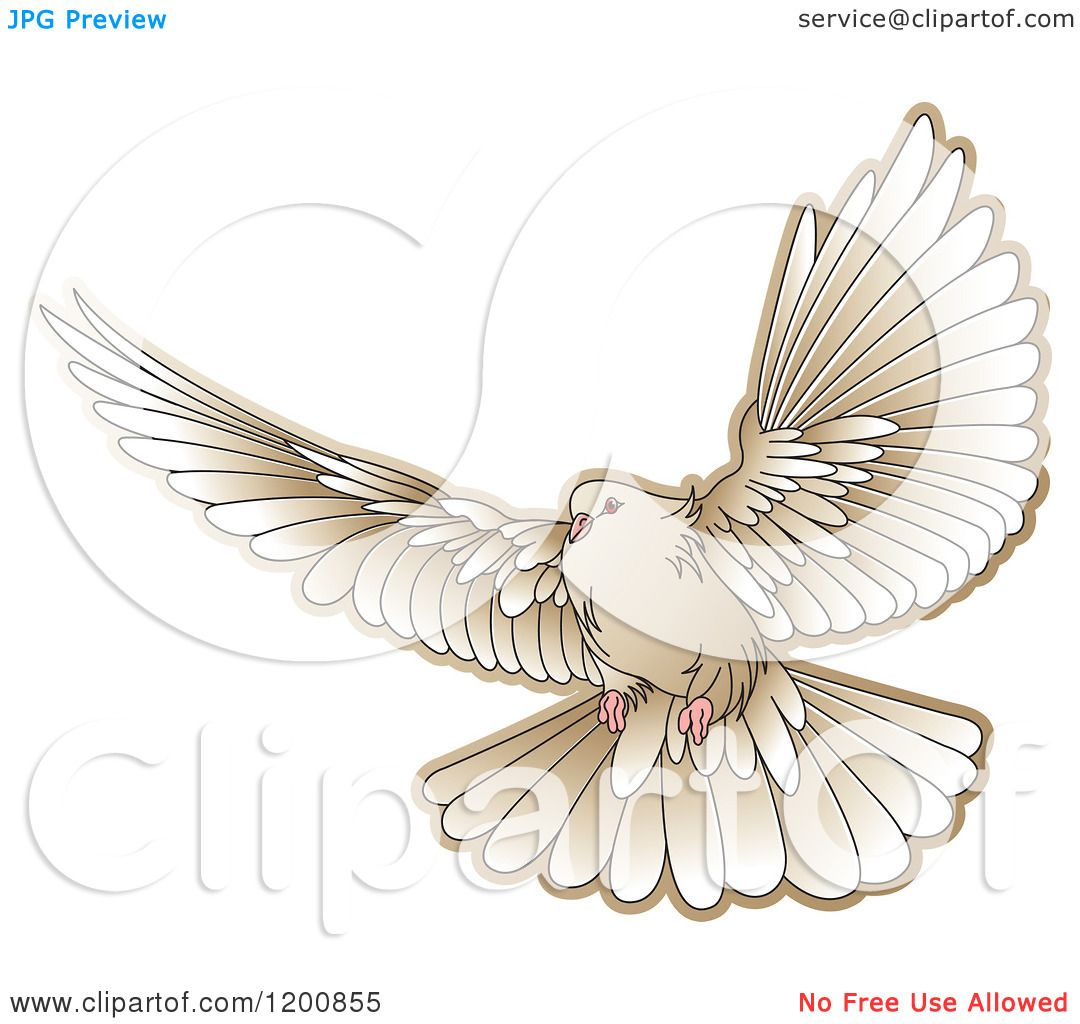 It is a photo of Obsessed Realistic Dove Drawing
