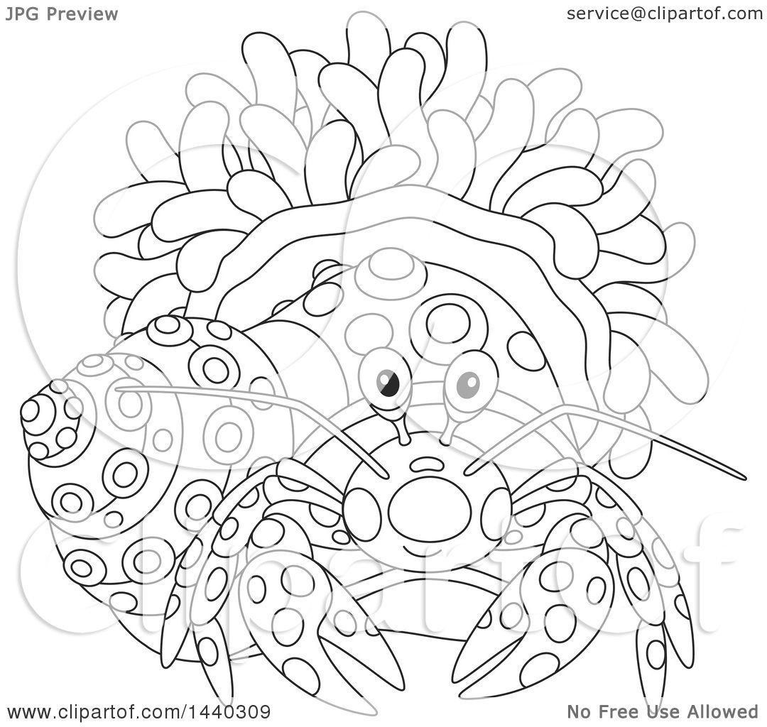 Fantastic Anatomy Of A Hermit Crab Embellishment - Anatomy and ...