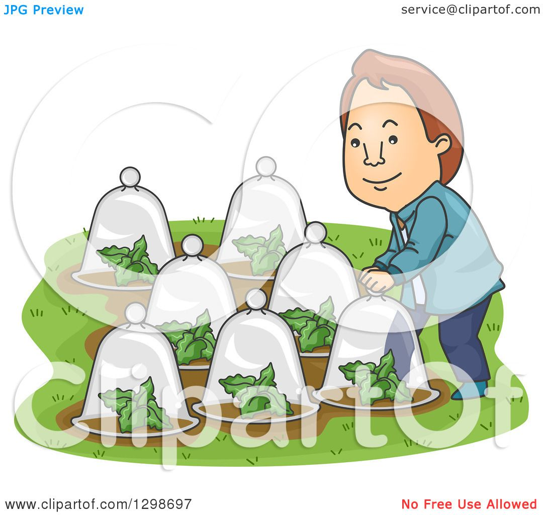 Clipart Of A Cartoon Brunette White Man Putting Glass Dome Cloches Over His Plants In Garden