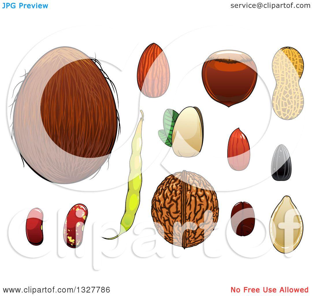 Clipart of a Cartoon Coconut, Almond, Hazelnut, Pistachio ...