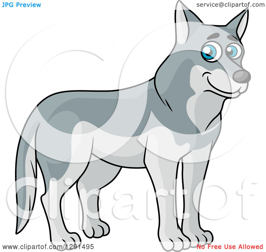 Clipart of a Cartoon Happy Blu Eyed Gray Wolf - Royalty ...