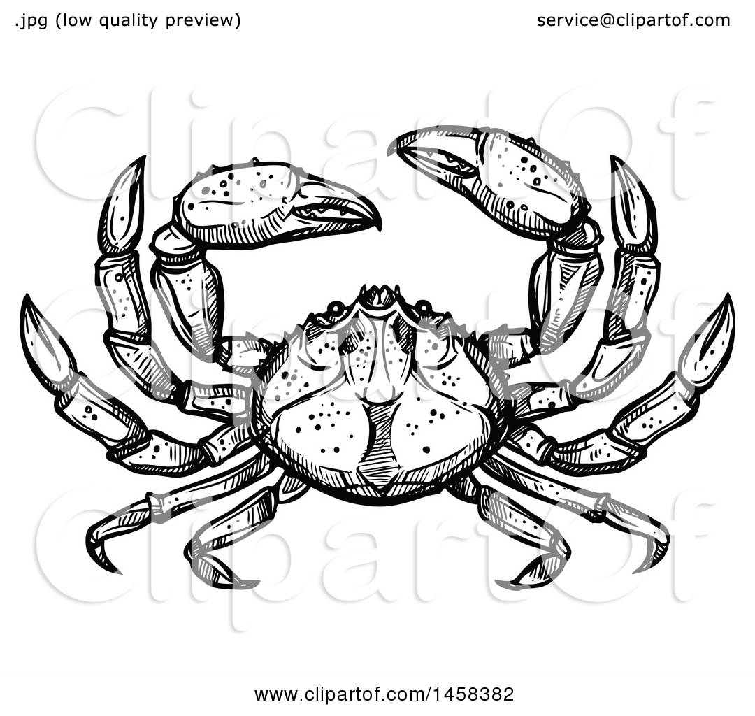 Clipart of a Crab in Black and White Sketched Style - Royalty Free ...