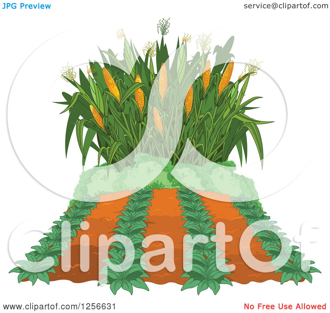 Clipart of a Crop and Corn Maze
