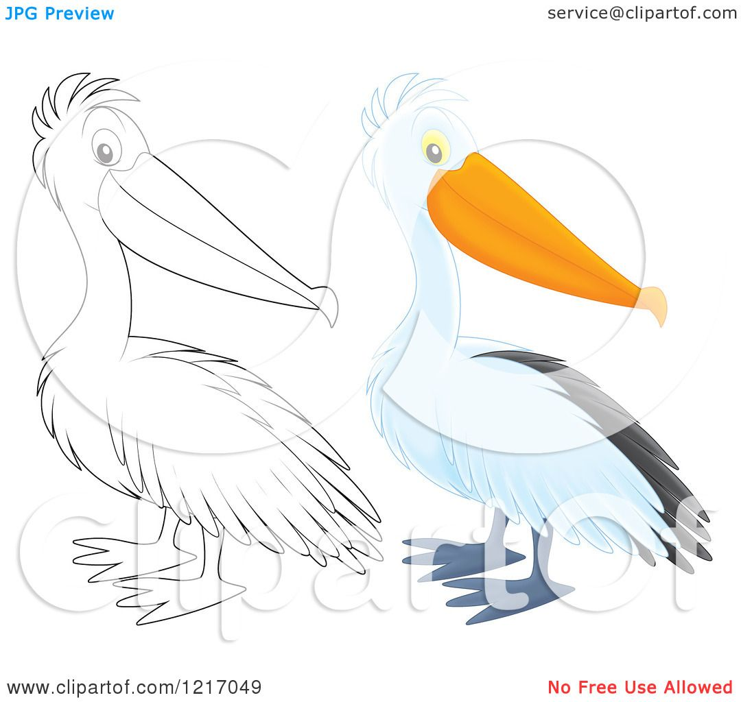 clipart of a cute airbrushed pelican in color and outline royalty