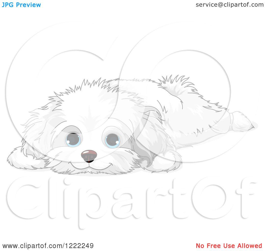 Clipart of a Cute Bichon Frise