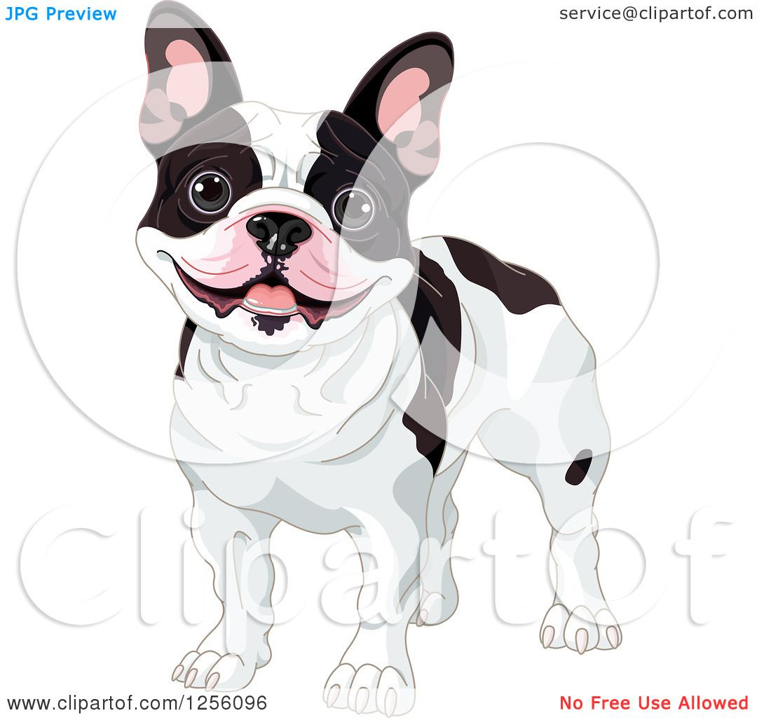 b23f40a38659 Clipart of a Cute Black and White Happy French Bulldog - Royalty Free  Vector Illustration by