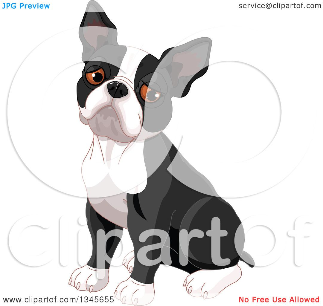 Clipart of a Cute Boston Terrier Dog Sitting and Pouting - Royalty ...