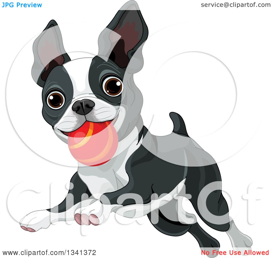 royalty free rf clipart of boston terriers illustrations